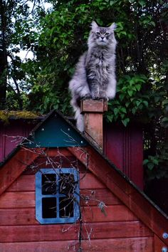 he stands guard above the fairy home