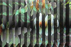 Megan Jenkinson: Phyto-plasts - Art Collector