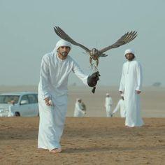 VIDEO 9/17/14 Preparing/training for 2014 falconry season PHOTO:faz3