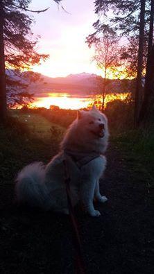 Finally summer again :-) Mixed Breed, Dogs, Summer, Animals, Summer Time, Animales, Animaux, Pet Dogs, Mixed Race