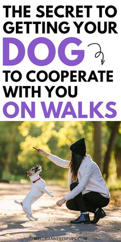 Dog walking tips for new dog owners. The secret to getting your dog to cooperate with you on walks.