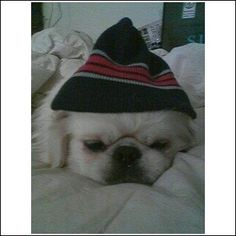 Bubbers in his beanie!