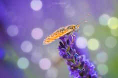 Natural light by Pier Luigi Saddi on 500px