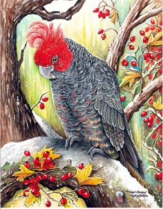 Cute Australian Animals Pictures that Can Melt Your Heart [So Cute] - NvH Cute Australian Animals, Australian Birds, Exotic Birds, Colorful Birds, Beautiful Birds, Animals Beautiful, Watercolor Bird, Cross Paintings, Little Birds