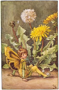 """Vintage print 'The Dandelion Fairy' by Cicely Mary Barker from """"The Book of the Flower Fairies""""; Poem and Pictures by Cicely Mary Barker, Published by Blackie & Son Limited, London [Flower Fairies - Spring] Cicely Mary Barker, Spring Fairy, Fairy Pictures, Dandelion Flower, Dandelion Clock, Vintage Fairies, Fantasy Illustration, Digital Illustration, Science Illustration"""