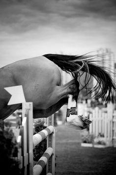 #horses #showjumping