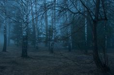 Photograph Witchy forest by Andrey  on 500px