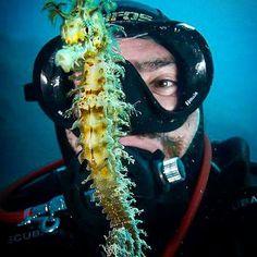 #seahorse #selfie #diving #eudiselfie