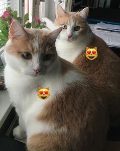 Good morning huomenta Доброе утро#котики #cat #kissa #rauma #finland