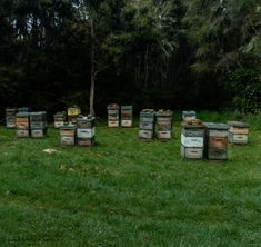 Bee Hives along the walk to Pinchgut Hut. Day walks in Canterbury, New Zealand Bee Hives, Adventure Photography, Outdoor Furniture Sets, Outdoor Decor, Canterbury, Walks, Photo And Video, Instagram