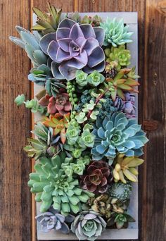 Be right back. Getting lost inside this succulent planter
