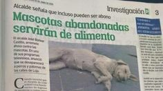 Avoid death of stray dogs and cats in Loja