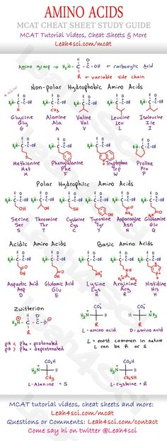 MCAT Amino Acid Chart - Study Guide Cheat Sheet for the Biology/Biochemistry section on the MCAT. Includes structure, variable groups, hydrophobic/hyrophilic