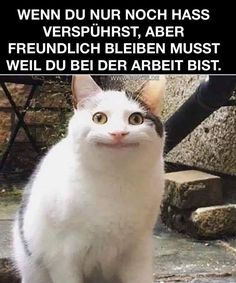 Memes / PONKS - The best care side. - Krankenschwester witze Memes / PONKS - The best care side. 9gag Funny, Funny Memes, Hilarious, Funny Sayings, Animal Jokes, Funny Animals, Cute Animals, Great Ab Workouts, Northwestern University