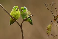 Parrotlets- I love mine.  He is soooo happy all of the time.  Wish I could be more like him!!!!!