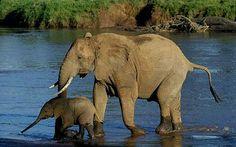 samburu national park photos - Bing Images