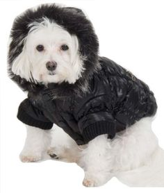 Fashion Pet Quilted Dog Parka, Black, Small by Fashion Pet, http://www.amazon.com/dp/B002NC7LD2/ref=cm_sw_r_pi_dp_BLZwqb02MKNBJ