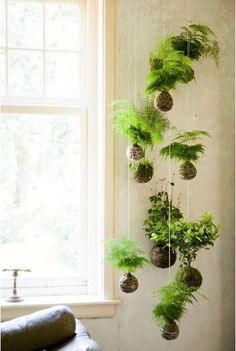 kokedama moss garden - Google Search                                                                                                                                                                                 More