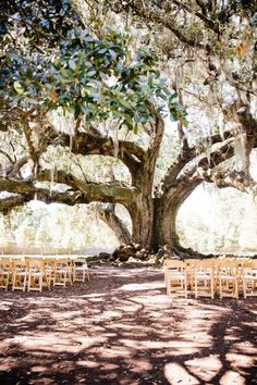 Modern New Orleans Destination Wedding with Colorful Style Outdoor wedding ceremony. Wedding News, Diy Wedding, Wedding Styles, Wedding Ceremony, Wedding Venues, Dream Wedding, Witch Wedding, Whimsical Wedding, Forest Wedding