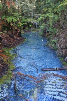 … speechless - Whakarewarewa forest near Rotorua, New Zealand