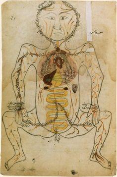 Corps en position accroupie. Traité d'anatomie persan. Mansûr ibn Muhammad ibn Elyâs Shirâzi, Tashrîh-i mansûrî (L'Anatomie de Mansûr), Iran, vers 1425-1450.