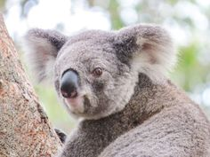 Road Trip Australien Ostküste von Sydney bis Cairns. Highlights, Sehenswürdigkeiten und Tipps für eine Rundreise mit Campervan entlang Australiens Ostküste.