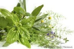 7 Underrated Medicinal Plants | Herbs and Oils Hub