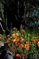 Boojum Tree's Hidden Gardens in Phoenix - Foskett creative Photography Hidden Garden, Tree Wedding, Photo Tree, Creative Photography, Phoenix, Photo Galleries, Gardens, Gallery, Plants