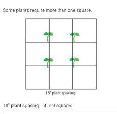 Square foot gardening - Spacing
