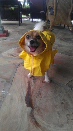 My dog a few days ago-All ready for Isaac! - Imgur