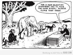 Fair selection - animals climbing tree - Albert Einstein quote