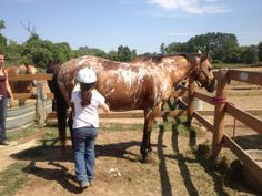 Summer Camps - Maybury Riding Stable (northville, Mi) !!! Bubble bath time.