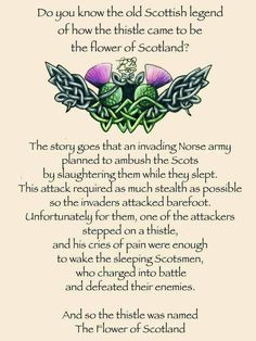 The legend of the thistle. Scottish sayings. Scotch, Tartan, Plaid, Scotland History, Thinking Day, Scottish Highlands, Scottish Gaelic, Scottish Thistle Tattoo, Scottish Tattoos