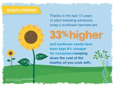 Thanks to the last 15 years of plant breeding advances, today's sunflower harvest are 33% higher.