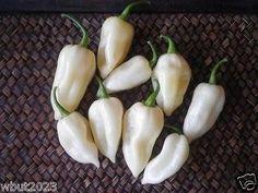 White ghost pepper sms / wa 085777119992 line id : silkynazma