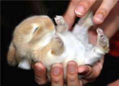 Good-Looking rabbit #rabbitdaily