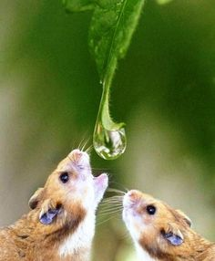 Water... Most precious