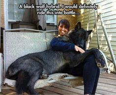 "Black Wolf Hybrid  -  NEVER a good idea!  I've worked with wolves and hybrids.  They never forget how to run down and kill prey.  Children whose hybrid pets were ""safe"" and trusted, have died when the hybrid's wolf instincts unexpectedly kick in.  A wild animal is never truly a pet, never 100% trusted."