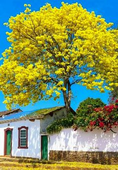 Tree behind the wall Unique Trees, Colorful Trees, Beautiful Flowers, Beautiful Places, Beautiful Scenery, Image Nature, Nature Tree, Tree Forest, Plantation