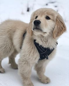 Baby Puppies, Baby Dogs, Cute Puppies, Pet Dogs, Dogs And Puppies, Dog Cat, Doggies, Baby Animals, Cute Animals