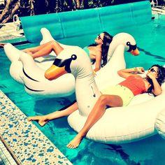 Premium, elegant, pool swan | Giantswan.com.au