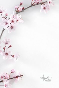Ideas for flowers white background photography wedding photos White Background Photography, Pastel Background, Framing Photography, Abstract Photography, Wooden Background, Background Images, Stock Background, Photography Flowers, Photography Photos