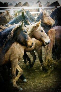 """Horses- """"Bread may feed my body, but horses feed my soul"""""""
