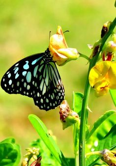 1136 Best Beautiful Colorful Butterflies Images In 2019 Beautiful