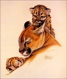 Coheleach Cougar and Cubs Big Cats Art, Cat Art, Animal Sketches, Animal Drawings, Iberian Lynx, Color Pencil Sketch, Lion Cat, Baby Images, Pastel