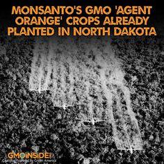 Monsanto's GMO 'Agent Orange' Crops Already Planted In North Dakota. More Here: http://gmoinside.org/monsantos-gmo-agent-orange-crops-already-planted-in-north-dakota/