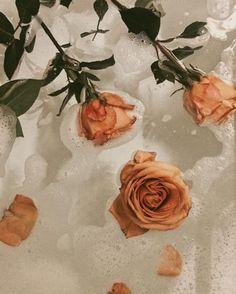 Ideas flowers photography wallpaper beauty roses for 2019 Orange Aesthetic, Flower Aesthetic, Aesthetic Vintage, Aesthetic Art, Aesthetic Body, Aesthetic Coffee, Beige Aesthetic, Aesthetic Beauty, Images Esthétiques