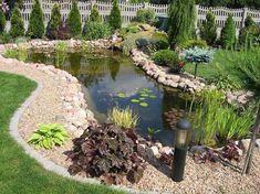 bassin de jardin -plantes-aquatiques-cailloux-poissons