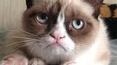 Grumpy Cat to launch new book
