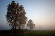 misty morning by Krzysztof W. on 500px